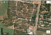 תמונת לווין של יער אילנות