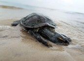 Stop oil spills, or watch poor animals die