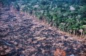 Amazon Rainforest Deforestation
