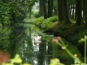 بجعة في بحيرة
