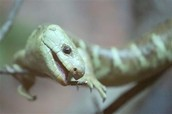 Reptiles!