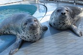 Seals in Captivity