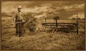 Men farmers