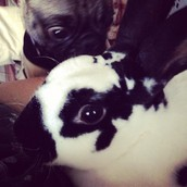 Loco with his favorite bunny friend