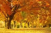 Me estacion favorita es otoño.