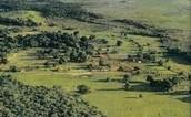 Farming Lands