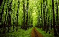 A Tree Pass