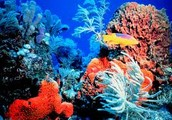 Effects on Coral Reefs