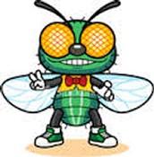 Fabio the Fly