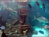 Snorke The Ruins Of Atlantis!