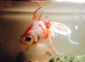 Fish eDNA - looking for collaborators