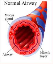 Normal Airway