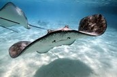 save stingrays