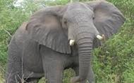 Elephants are great animals.