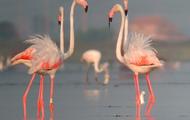 Nature Park Ebro Delta
