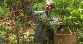 衣索比亞紅櫻桃水洗列坎普提G2尼溝索農場(售價520/225G)