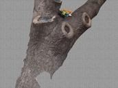 The photoshop tree