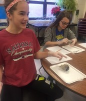 7th Grade - Cow-Eye Dissection