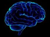After puberty, brains can only draw from one side at a time.