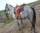 Texan Rider