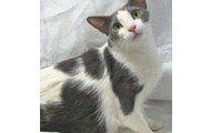 This is Kato. He is the featured cat of the month!!
