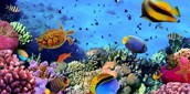 organisms living around or in coral reefs