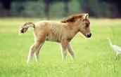 History Horses