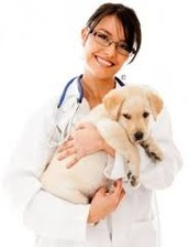 What are the rewards of being a veterinarian?