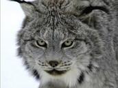 Lynx Group