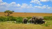 The Serengeti Plain