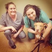 Dr. Kara Rogers, Best Care Pet Hospital