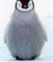 Penguins (cannon)