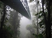 Bridge going through a jungle!
