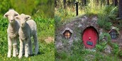 The sheep's house and the sheep's kids