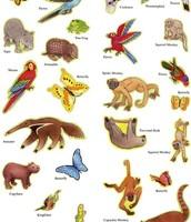 Animal Population