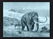 The animals in the ice age