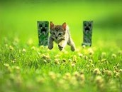 Run Kitten!