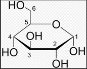 Monomers for Carbohydrates