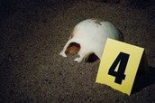 How many forensic anthropologists are there in the world?