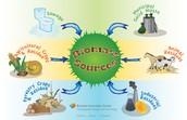 Biomass Renweable Energy