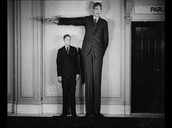 Irish Average Height