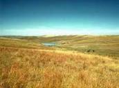 A grassland.