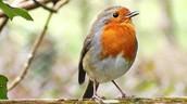 Which animals live in rainforest