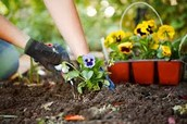Come Plant Flowers in Celebration of Earth Day at SIA-George