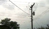 Raining Spiders