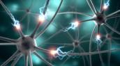 Nerves during a Seizure