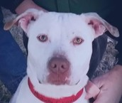Prince - available for adoption through TRP