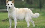 Whight dog