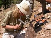 Basic information about paleontology
