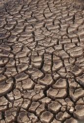 Drought Nooooooo!!!!